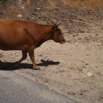 Bulle von Tölz äh Korsika